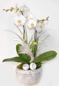 Compo orchidée
