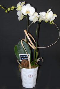 Compo orchidée 2