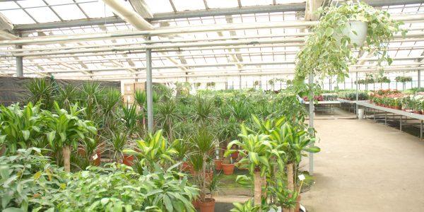 Grandes_plantes_vertes